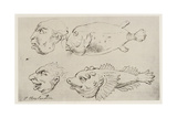 Anthropomorphic Heads of Men and Fish Giclee Print by Thomas Rowlandson