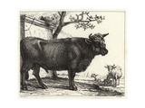 The Bull Giclee Print by Paulus Potter