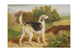 Ravager, One of the Lambton Hounds Giclee Print by James Ward