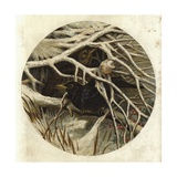 Blackbird and Thrush, in Covert Giclee Print by Harrison William Weir