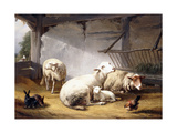 Sheep, Rabbits and a Chicken in a Barn, 1859 Giclee Print by Eugene Joseph Verboeckhoven
