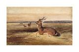 Resting Deer Giclee Print by Antoine Louis Barye