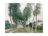 Alley of Poplars Along the Loing, 1892 Giclee Print by Alfred Sisley