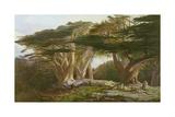 The Cedars of Lebanon, 1861 Giclée-Druck von Edward Lear