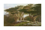 The Cedars of Lebanon, 1861 Giclee Print by Edward Lear