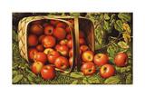 Cesta de manzanas Lámina giclée por Levi Wells Prentice