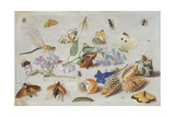Butterflies and Other Insects, 1661 Giclee Print by Jan Van, The Elder Kessel