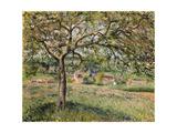 Apple Tree in Eragny, 1884 Reproduction procédé giclée par Camille Pissarro