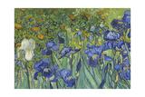 Irises, 1889 Giclee Print by Vincent van Gogh
