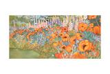 Poppy Border Giclee Print by Lillian Delevoryas