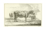 Three Cows Giclee Print by Aelbert Cuyp