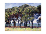 Pines, Cap D'Antibes, 1888 Giclee Print by Claude Monet