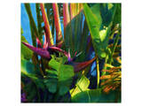 WaterPalm 03 Prints by Kurt Novak