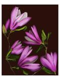 Garden, maroon pink Magnolia Poster