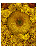 Golden Garden Sunflowers & Marigolds Prints