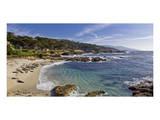 17 Mile Drive Monterey Print by Michael Polk