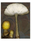 Mushroom yellow marbled Amanita Prints