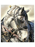 Dapple Grey Posters by Kari Brooks