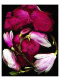 Red pink Magnolia Heart Spring Posters