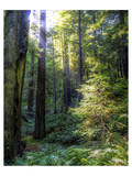 Avenue of the Giants Prints by Michael Polk