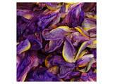 Purple Iris Petals Art