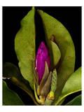 Garden Bud pink brown II Posters