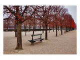 Tuileries Gardens in Winter, Paris, Ile de France, France Prints