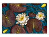 Blue flower white water Prints