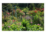 Claude Monet's Garden in Giverny, Department of Eure, Upper Normandy, France Print