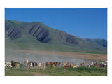 Horse and cattle herd at Tafi dell Valle near Tucuman, Argentina Prints