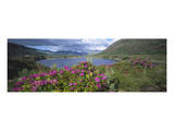Landscape in Killarney National Park, County Kerry, Munster, Ireland Prints