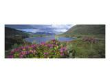 Landscape in Killarney National Park, County Kerry, Munster, Ireland Prints