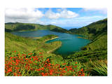 Montbretias in bloom at the caldera lake Lagoa do Fogo, Sao Miguel Island, Azores, Portugal Prints