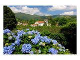 Hortensias and church of Furnas, Sao Miguel Island, Azores, Portugal Prints