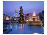 Christmas tree at Trafalgar Square, London, England, United Kingdom of Great Britain Prints