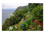 Hortensias and torch lilies on a steep slope near Nordeste, Sao Miguel Island, Azores, Portugal Poster