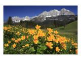 View towards the Wilder Kaiser Mountain Range, Tyrol, Austria Print