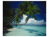 Palm beach, Maldives Art