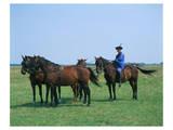 Horse show in Hortobagy National Park, Puszta, Hajdu-Bihar, Hungary Posters