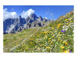 Meadow at Sexten Dolomites Nature Park, Province of Bolzano, South Tyrol, Italy Posters