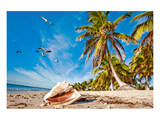 Smathers Beach in Key West, Florida Keys, Florida, USA Posters
