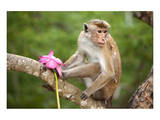 Monkey in the Temple District of the Dambulla Cave Temple, Sri Lanka Art