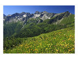 Flower meadow at Fellhorn mountain near Oberstdorf, Allgaeu, Swabia, Bavaria, Germany Prints