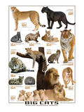 Große Katzen Kunstdrucke