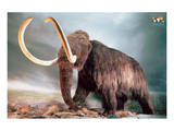 Woolly Mammoth Prints