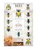 The World Of Bees Print