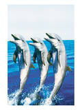 Dancing Dolphins Plakater