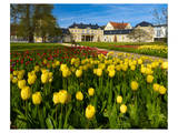 Orangery with Tulip Beds, Gera, Thuringia, Germany Prints