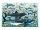 Sharks Prints
