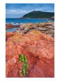 Baie de Rondinara Bay, Street of Bonifacio, Corsica, France Prints